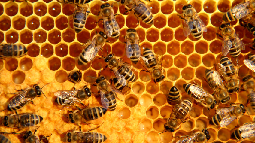 bees swarming over honeycomb