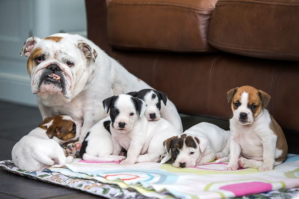 Dog sits with her litter of puppies