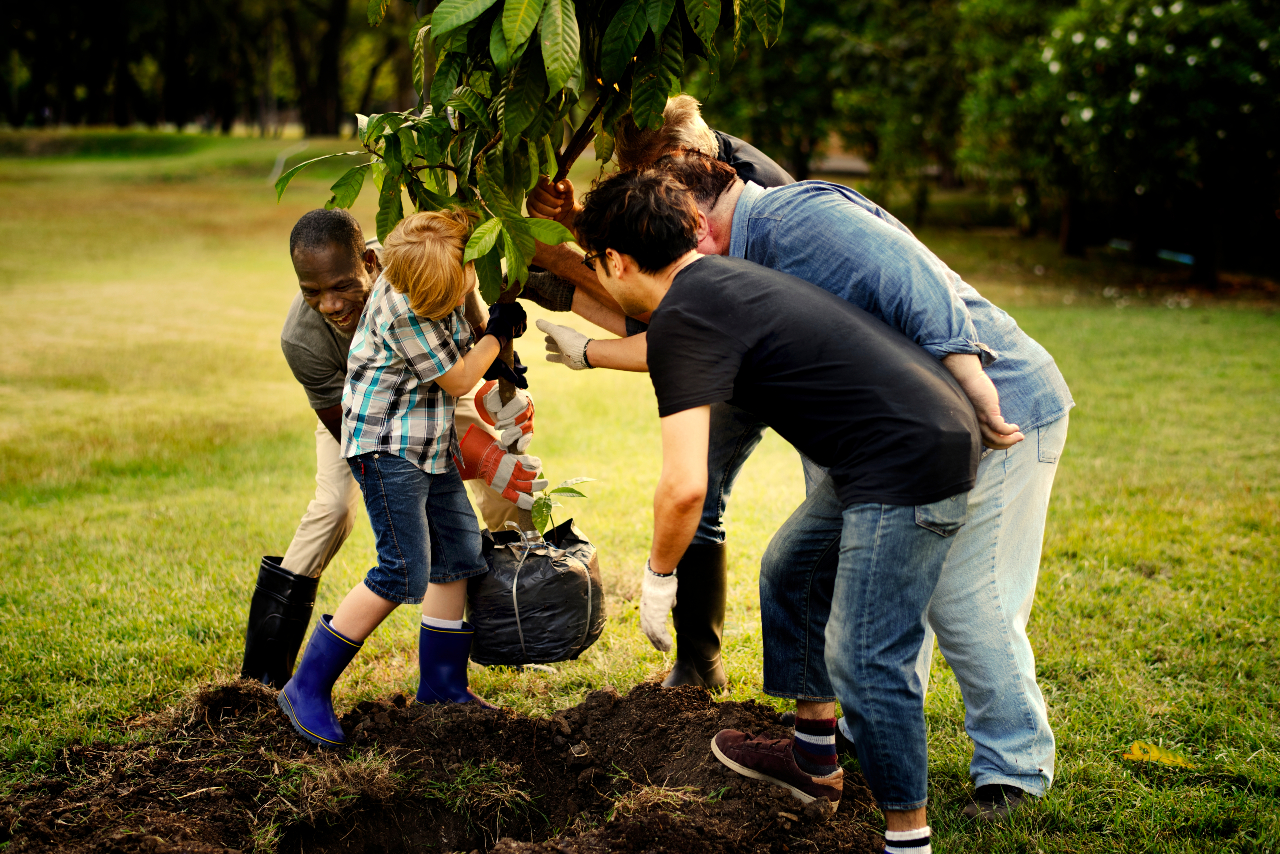 A group of people plant a tree in a field